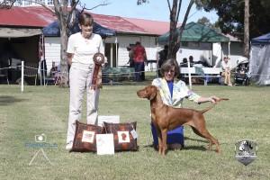 Australian Bred In Show