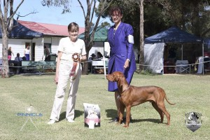 Opposite Sex Australian Bred In Show